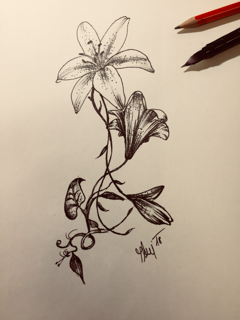 Lilie kresba, lilia drawing